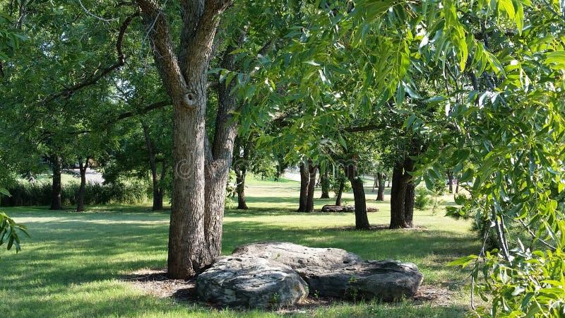 Rocas grandes debajo de árboles imagen de archivo