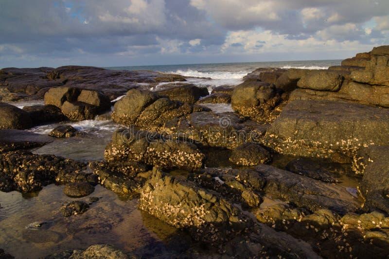 Rocas mojadas de oro a lo largo del océano foto de archivo