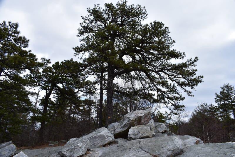 Rocas y árboles imagen de archivo libre de regalías