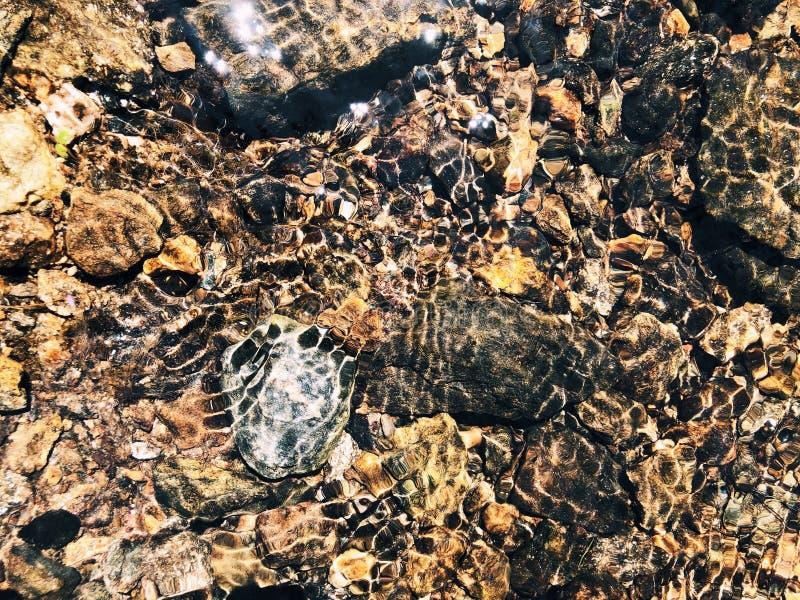 Rocas y piedras dentro de agua dulce claro imagen de archivo libre de regalías