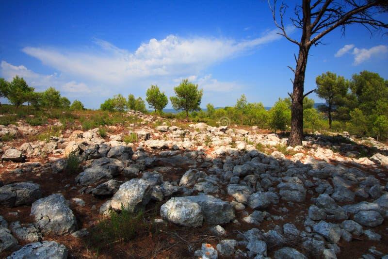 Rocas y pinos fotos de archivo