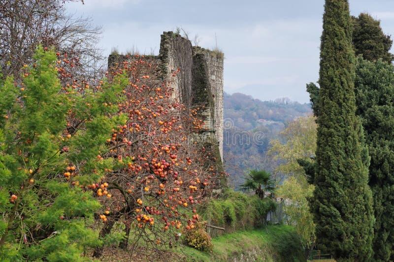Rocca二阿罗纳,废墟和柿树 图库摄影