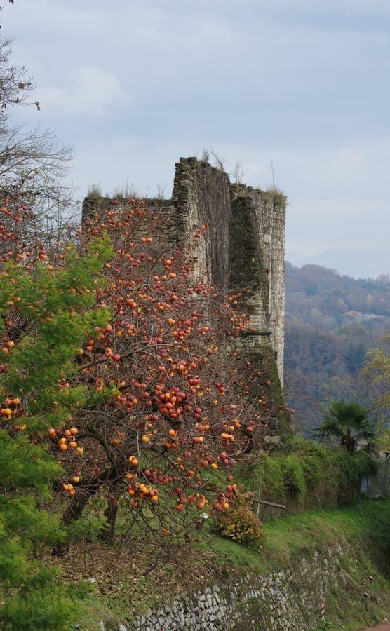 Rocca二阿罗纳,废墟和柿树 库存图片