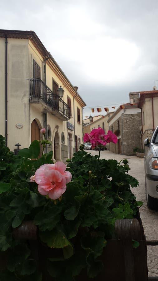 Rocca San Felice Flowers royalty-vrije stock afbeeldingen