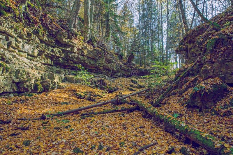 Rocce, alberi e foglie, autunno e giorno soleggiato Phot della natura di viaggio fotografia stock