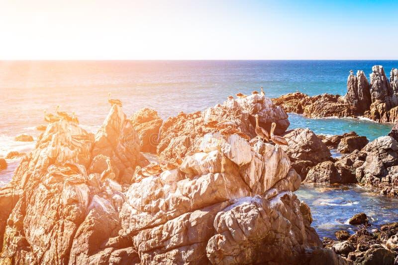 Rocce con i pellicani marroni nel Cile fotografie stock
