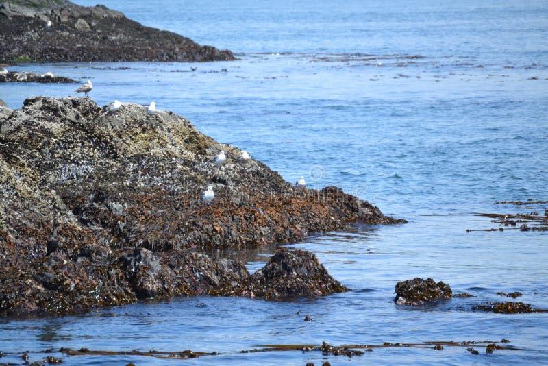 Rocce della balena nello stretto di Juan de Fuca immagini stock