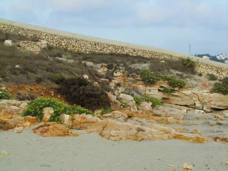 Rocce e piante verdi sulla sabbia della spiaggia fotografie stock