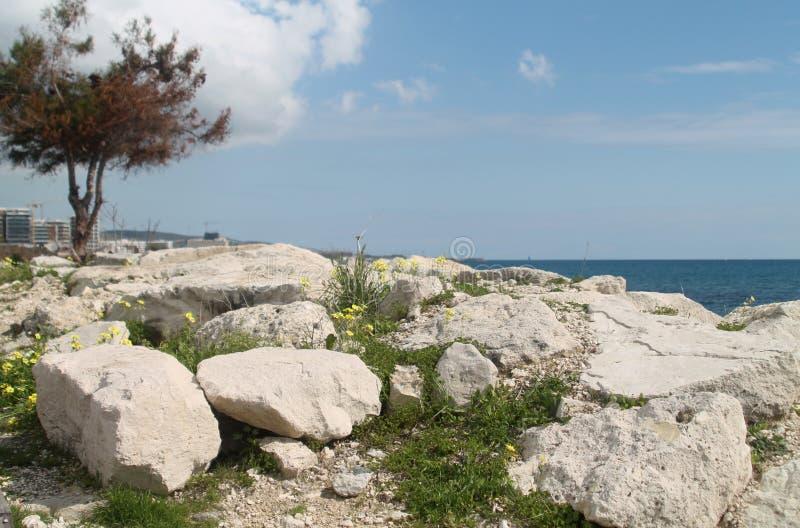 Rocce e wildflowers sulla spiaggia immagini stock