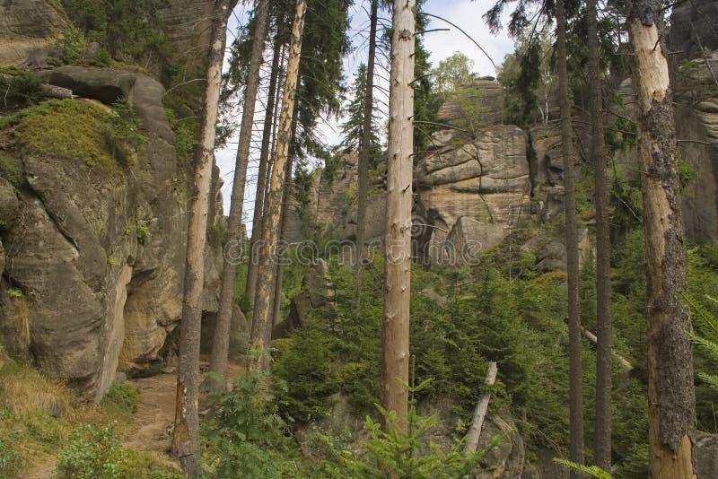 Rocce enormi nella foresta fotografie stock libere da diritti