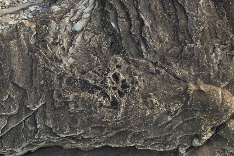 Rocce fossilizzate alle scogliere fossili di Joggins, Nova Scotia, Canada immagine stock