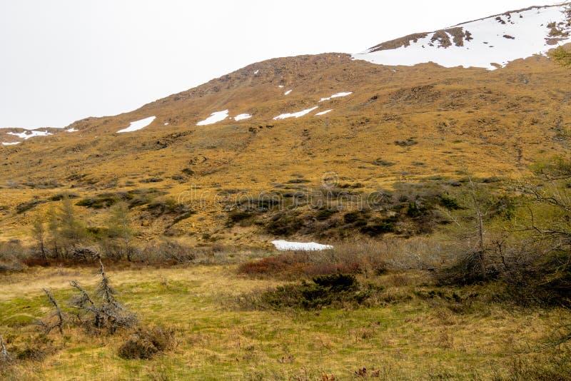 Rocce gialle notevoli degli altipiani, Gros Morne National Par fotografie stock