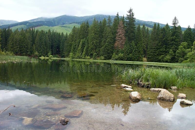 Rocce nell'acqua come complemento al paesaggio del lago Vrbicke con la riflessione dei dintorni sulla sua superficie fotografia stock