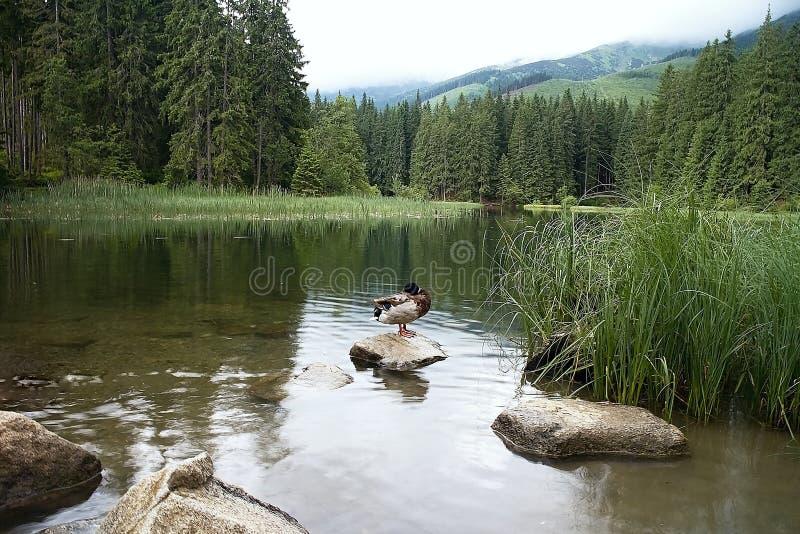 Rocce nell'acqua come complemento al paesaggio del lago Vrbicke con la riflessione dei dintorni sulla sua superficie fotografia stock libera da diritti