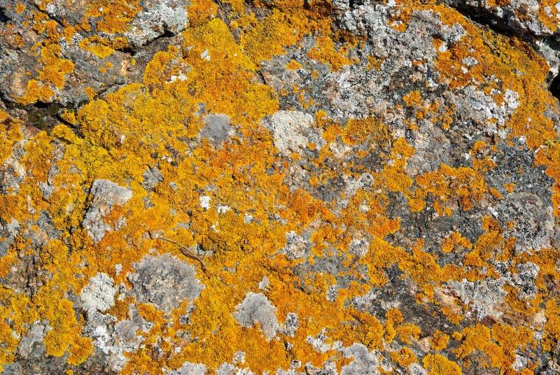Roccia con il lichene arancione fotografia stock