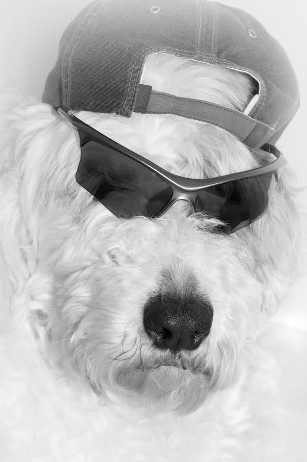 Roccia dei cani fotografia stock
