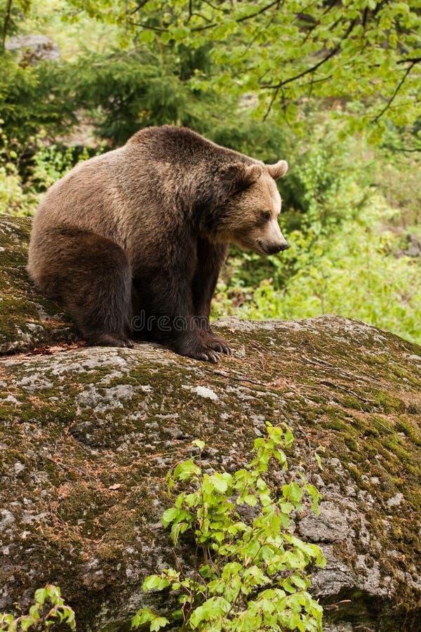 roccia dell'orso immagine stock libera da diritti