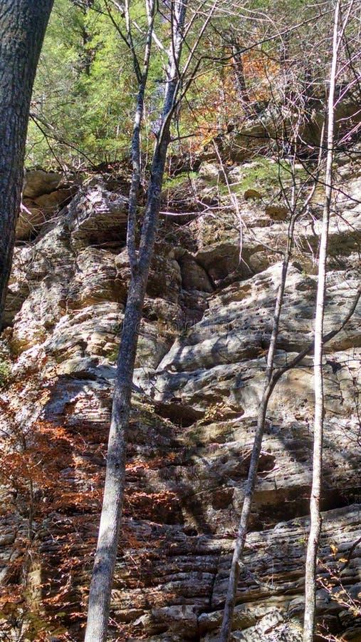 Roccia della foresta immagini stock libere da diritti