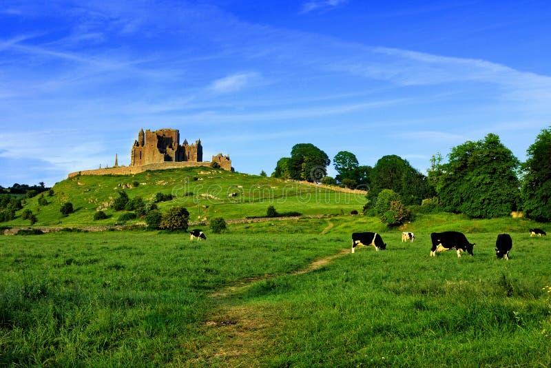Roccia di Cashel sopra i campi verdi con le mucche, Tipperary, Irlanda fotografia stock libera da diritti