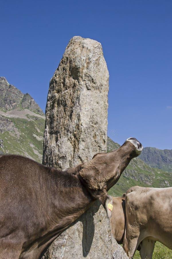 Roccia di Needley nel Silvretta immagini stock libere da diritti