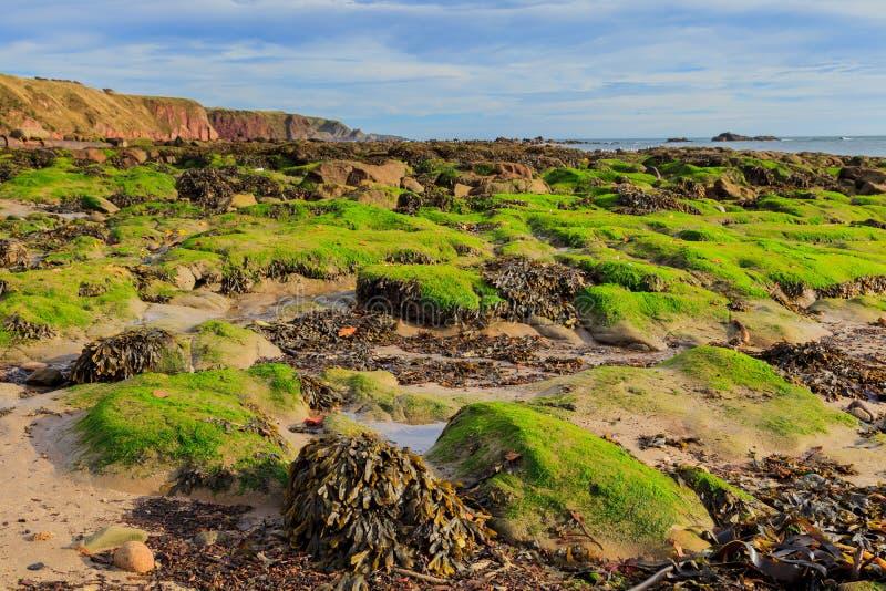 Roccia e spiaggia alla baia Aberdeenshire di Stonehaven immagine stock
