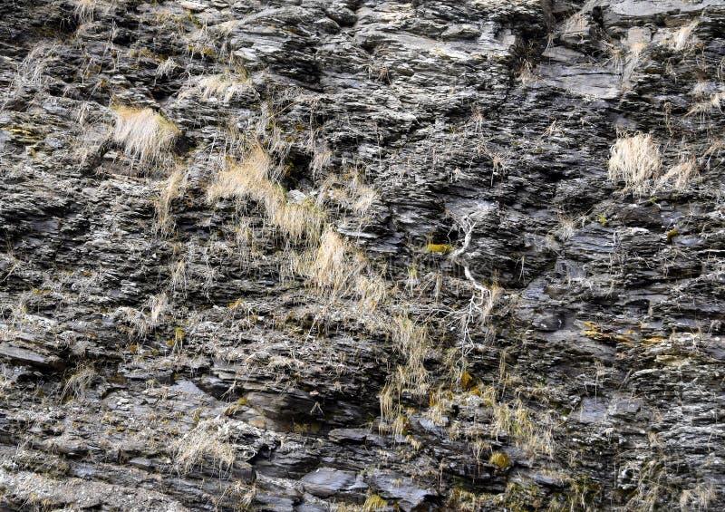 Download Roccia Naturale Con Le Piccole Piante Che Crescono Nelle Crepe Immagine Stock - Immagine di crescere, background: 117978689