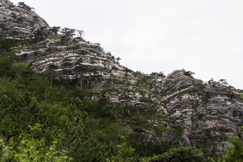Roccia pura, assomigliante alla parete ripida della montagna fotografia stock libera da diritti
