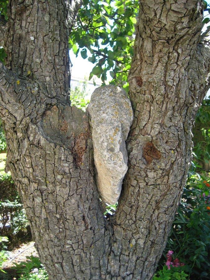 Roccia in un albero fotografia stock