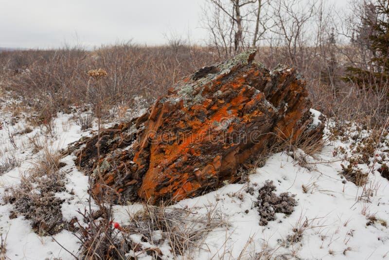 Rocha alaranjada dos líquenes do estepe ártico desolado do inverno foto de stock royalty free