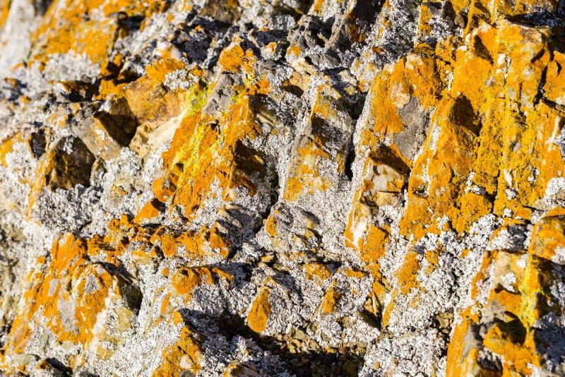 Rocha coberta no musgo alaranjado vívido, Califórnia imagens de stock