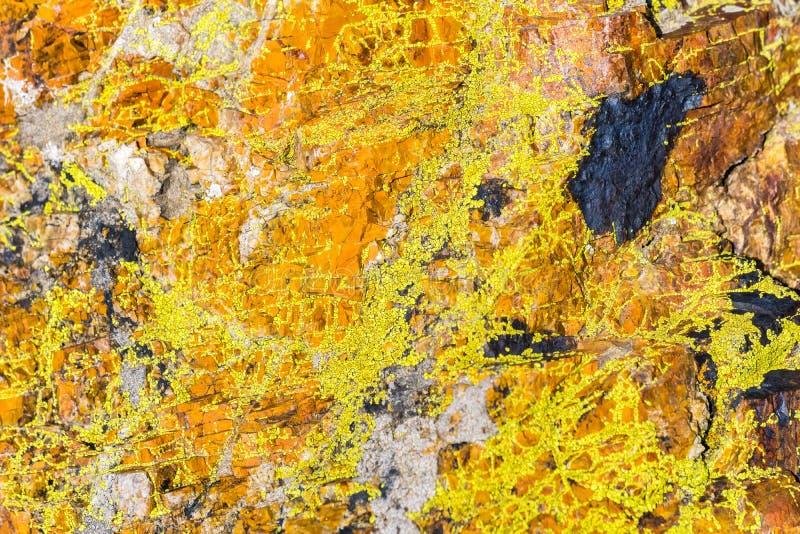 Rocha coberta no musgo alaranjado vívido, Califórnia foto de stock royalty free