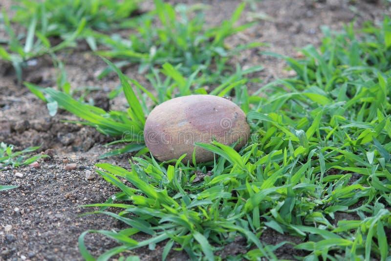 Rocha de pedra foto de stock