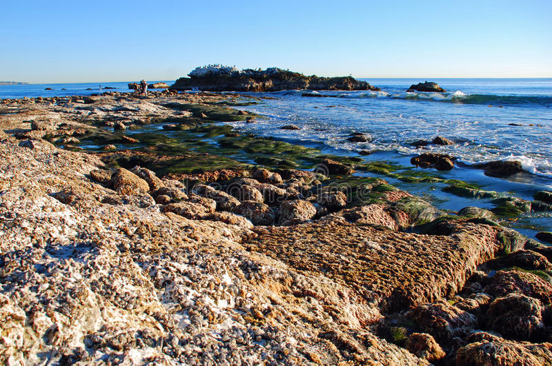 Rocha do pássaro na maré baixa fora do parque de Heisler Praia de Laguna, Califórnia imagens de stock royalty free