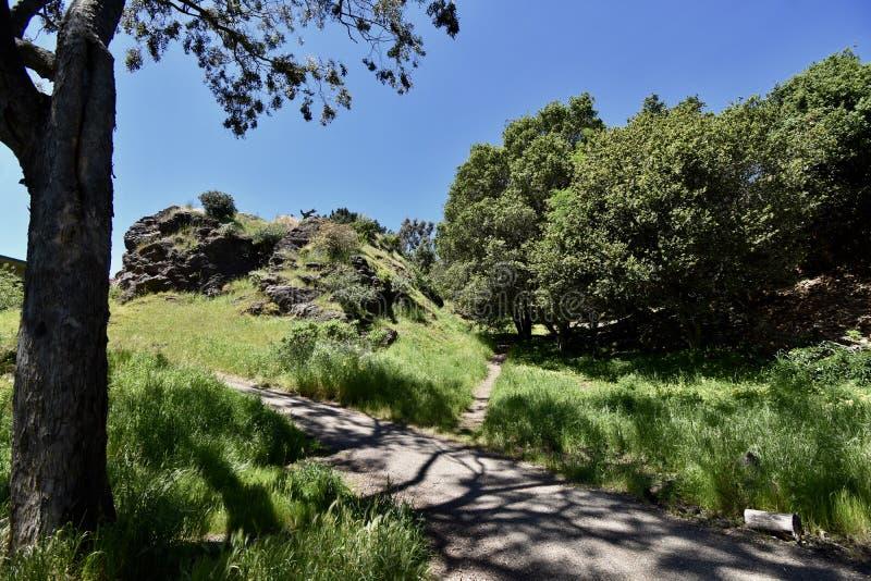 Rocha Franciscan do Chert da idade dos répteis, Corona Heights Park San Francisco, 5 imagens de stock