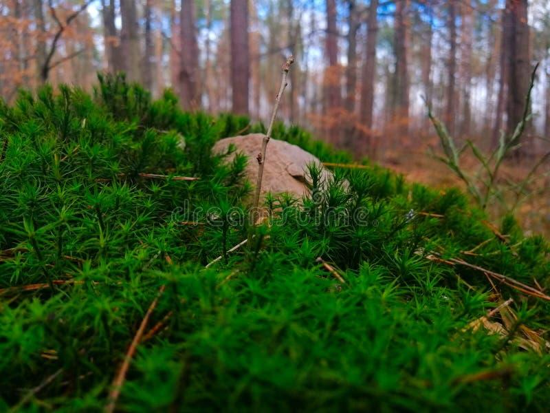 Rocha no musgo na floresta fotografia de stock royalty free