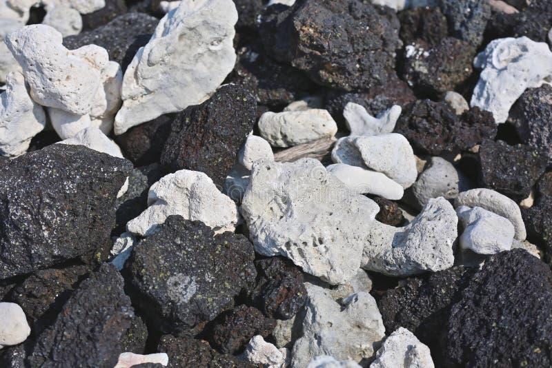 Rocha preta coral branca da lava imagem de stock