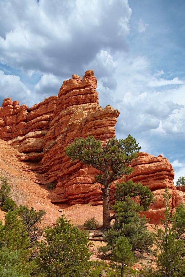 Rocha vermelha Cliff Hoodoos Pillar Spires Rise acima dos pinheiros mim imagens de stock royalty free