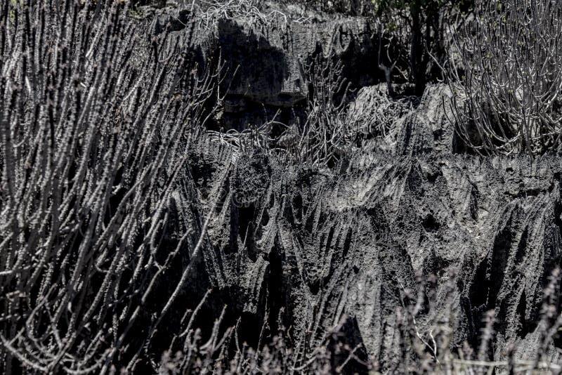 Rochas afiadas pretas em Ankarana Tsingy, marco de Madagáscar imagem de stock