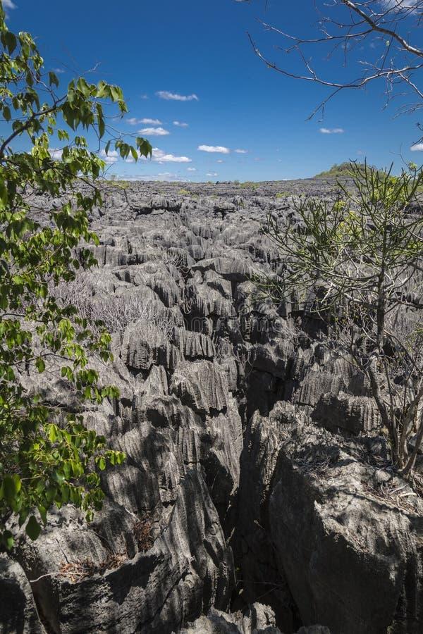 Rochas afiadas pretas em Ankarana Tsingy, marco de Madagáscar fotos de stock royalty free