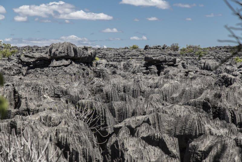 Rochas afiadas pretas em Ankarana Tsingy, marco de Madagáscar imagem de stock royalty free