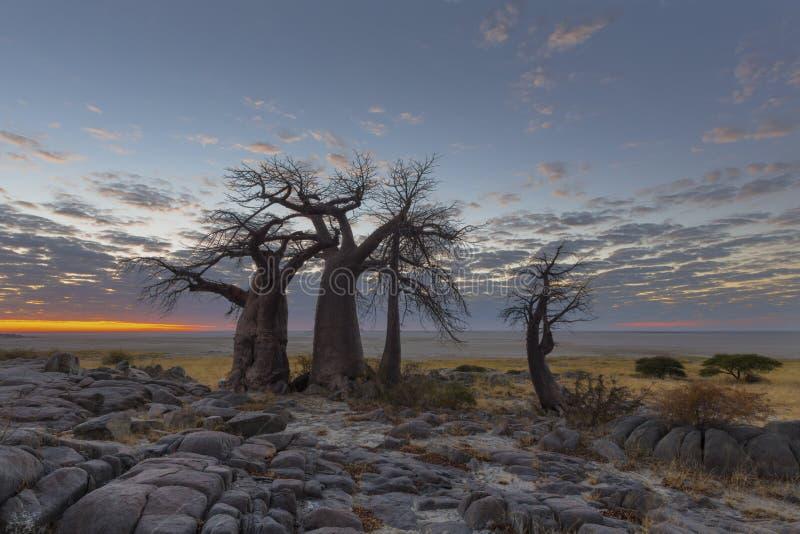 Rochas, baobabs e nuvens fotos de stock royalty free