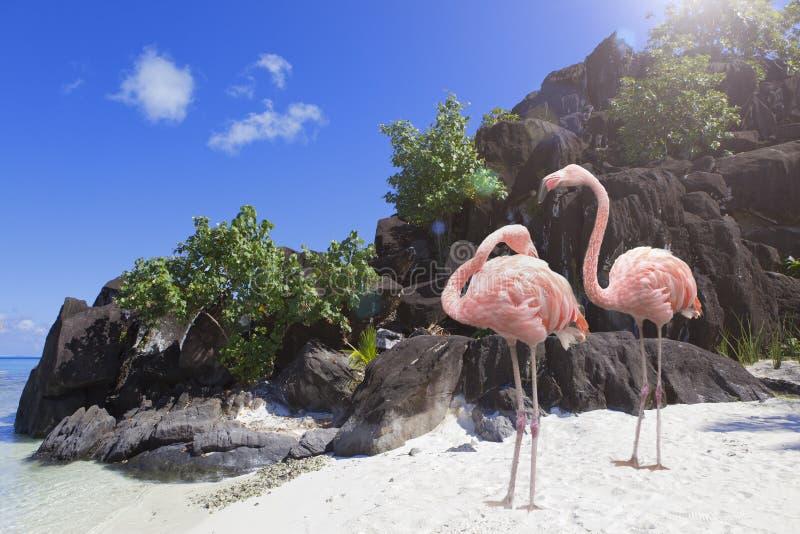 Rochas e flamingo pretos Bora-Bora polynesia foto de stock