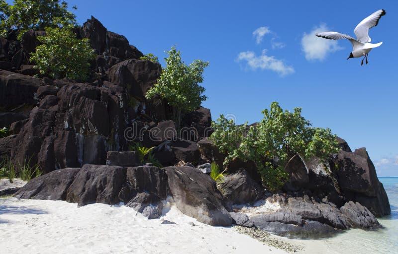 Rochas e gaivota pretas Bora-Bora polynesia imagem de stock royalty free