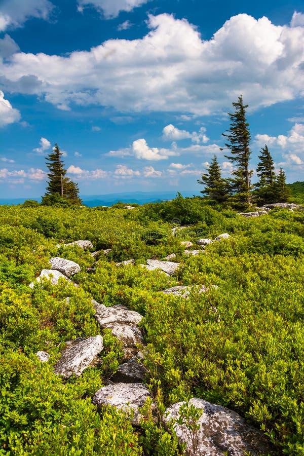 Rochas e pinheiros na conserva das rochas do urso, Monongahela Nationa foto de stock royalty free