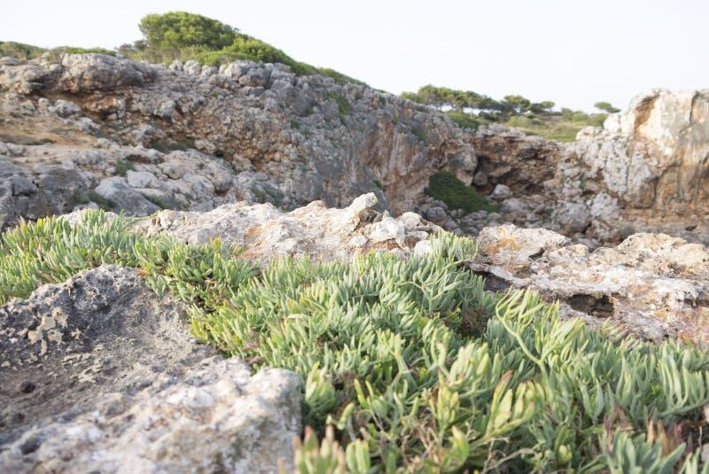 Rochas e plantas imagens de stock