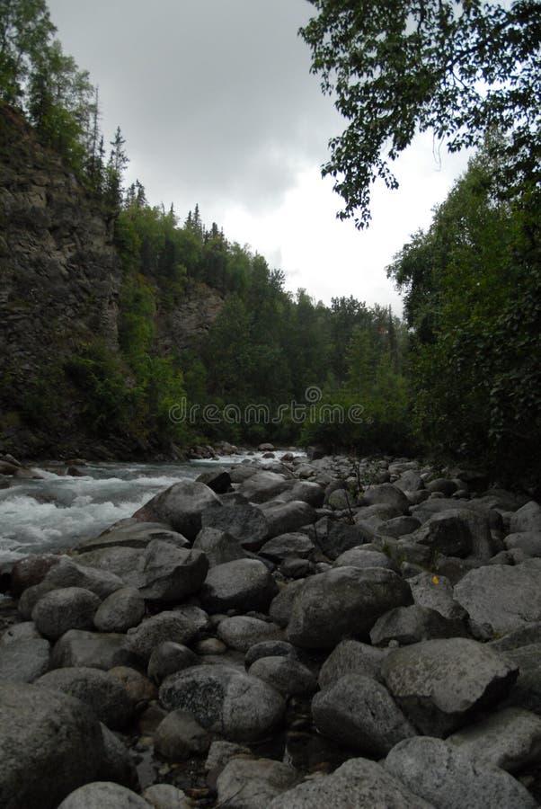 Rochas e rio através das árvores foto de stock