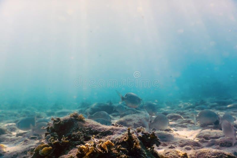 Rochas e seixos subaquáticos dos raios de sol no banco de areia do fundo do mar de peixes pequenos fotos de stock royalty free