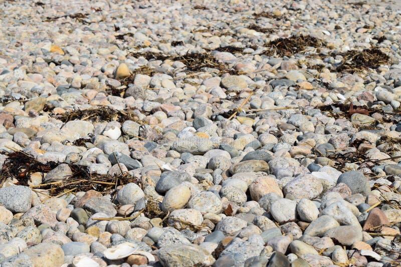 Rochas em uma praia rochosa com alguns escudos e alga foto de stock royalty free