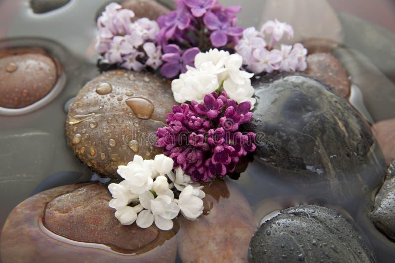 Rochas, flores, e água fotografia de stock royalty free