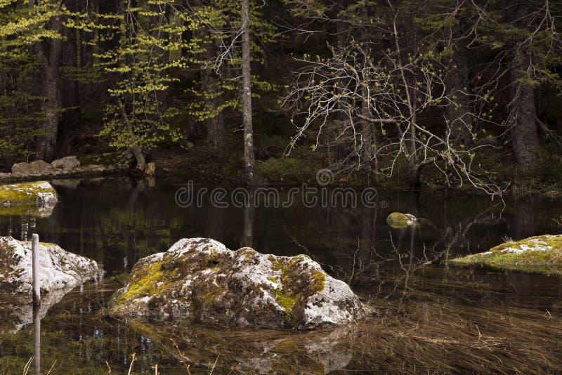 Rochas musgosos em um lago da floresta Ainda água, pedras submersas, escuridão Reflexões na água transparente Pedras e composit d fotografia de stock